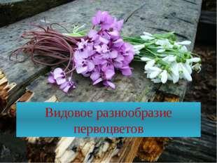 Видовое разнообразие первоцветов