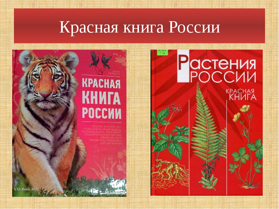 красная книга россии картинки летнего времени