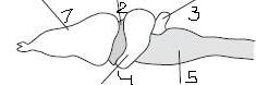 C:\Users\1\Desktop\головной мозг земноводного.png