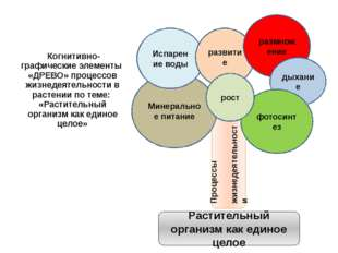 Когнитивно-графические элементы «ДРЕВО» процессов жизнедеятельности в растен
