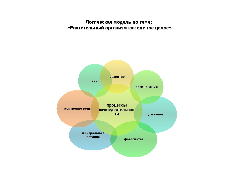 Логическая модель по теме: «Растительный организм как единое целое»