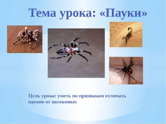 Цель урока: уметь по признакам отличать пауков от насекомых Тема урока: «Пауки»