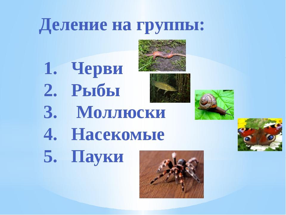 Деление на группы: 1. Черви 2. Рыбы 3. Моллюски 4. Насекомые 5. Пауки