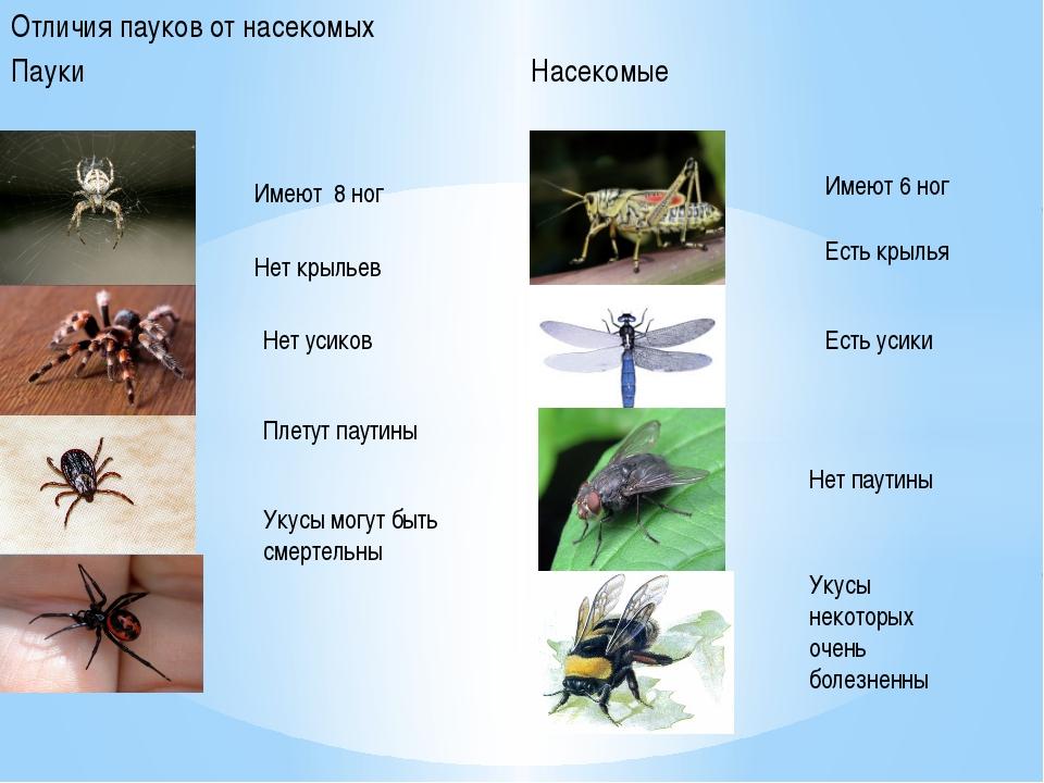 Отличия пауков от насекомых Пауки Насекомые Имеют 8 ног Нет крыльев Нет усико...
