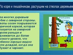 По коре и лишайникам, растущим на стволах деревьев. Кора многих деревьев груб