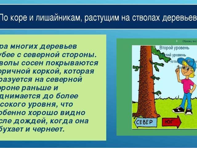По коре и лишайникам, растущим на стволах деревьев. Кора многих деревьев груб...