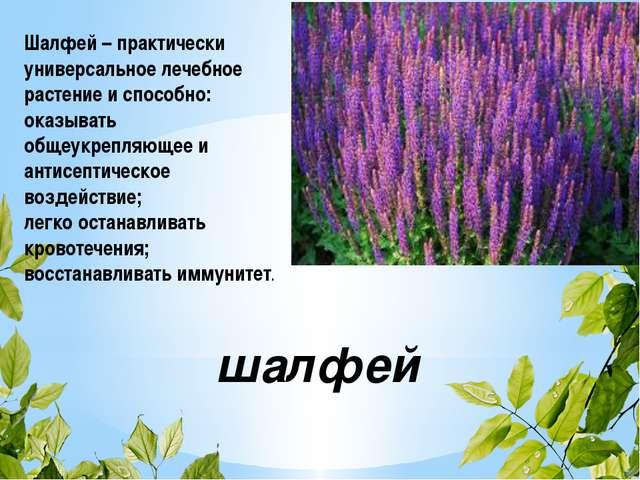 шалфей Шалфей – практически универсальное лечебное растение и способно: оказы...