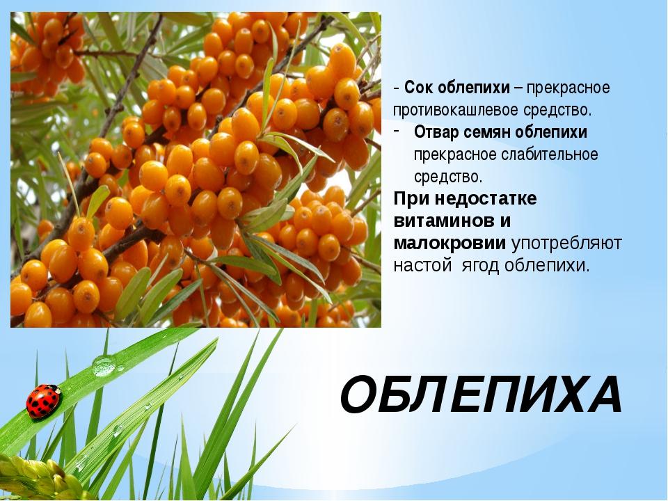 ОБЛЕПИХА - Сок облепихи– прекрасное противокашлевое средство. Отвар семян об...