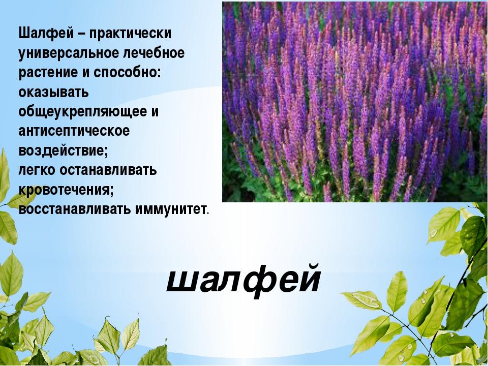 Лекарственные Растения Украины Фото И Описание