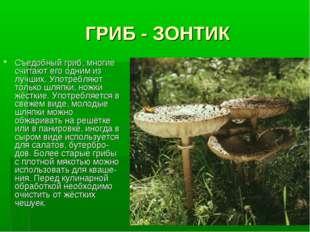 ГРИБ - ЗОНТИК Съедобный гриб, многие считают его одним из лучших. Употребляют