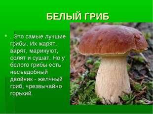 БЕЛЫЙ ГРИБ . Это самые лучшие грибы. Их жарят, варят, маринуют, солят и сушат