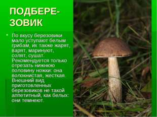 ПОДБЕРЕ- ЗОВИК По вкусу березовики мало уступают белым грибам, их также жарят