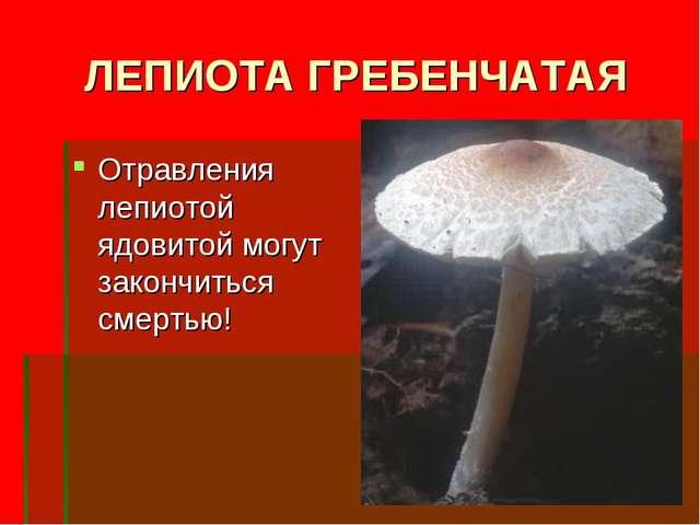 ЛЕПИОТА ГРЕБЕНЧАТАЯ Отравления лепиотой ядовитой могут закончиться смертью!