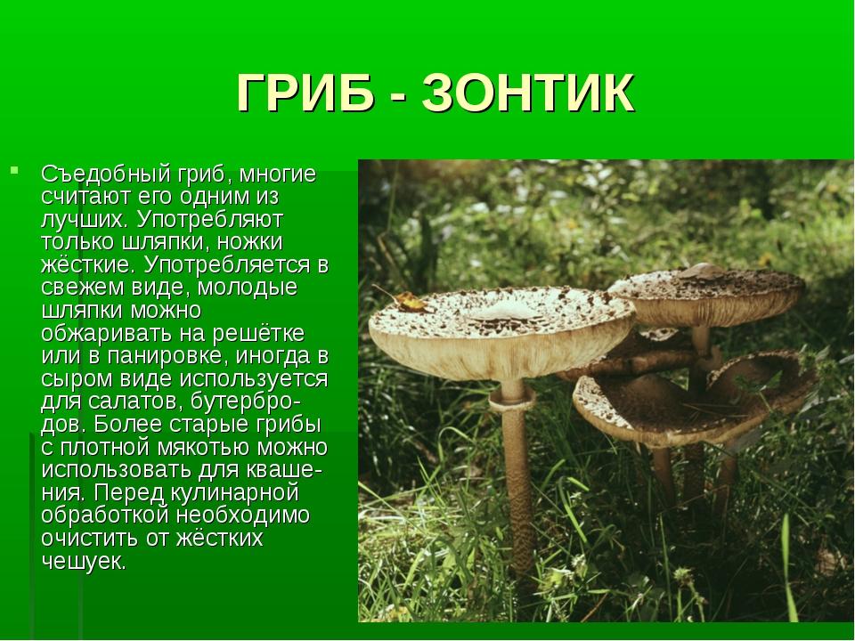 ГРИБ - ЗОНТИК Съедобный гриб, многие считают его одним из лучших. Употребляют...