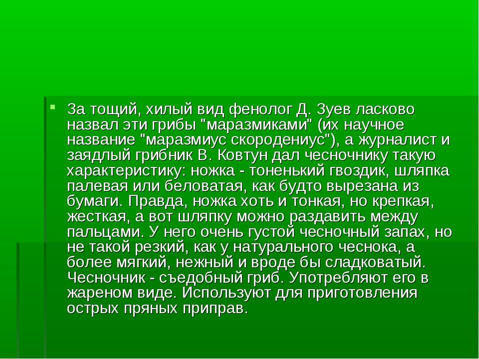"""За тощий, хилый вид фенолог Д. Зуев ласково назвал эти грибы """"маразмиками"""" (и..."""
