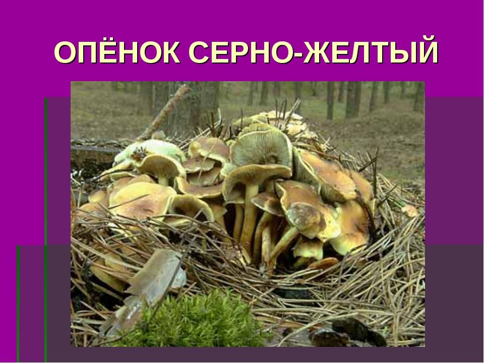 ОПЁНОК СЕРНО-ЖЕЛТЫЙ