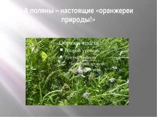 А поляны – настоящие «оранжереи природы!»