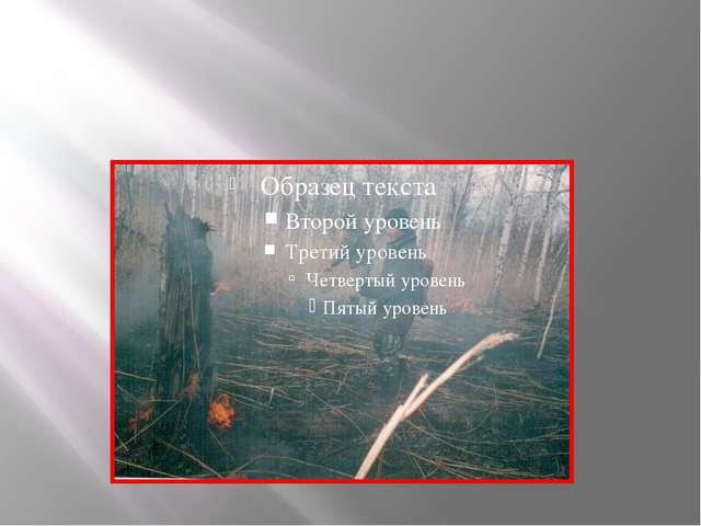 Опять в жару горят леса. «Человек, спаси! Ты можешь все на свете!»