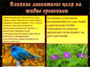 Ориентиром для перелетных птиц также служит магнитное поле Земли. Недавно уче