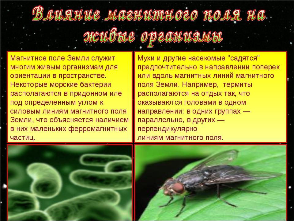 Магнитное поле Земли служит многим живым организмам для ориентации в простран...