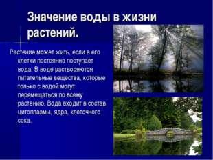 Значение воды в жизни растений. Растение может жить, если в его клетки постоя