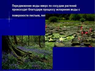 Передвижение воды вверх по сосудам растений происходит благодаря процессу исп