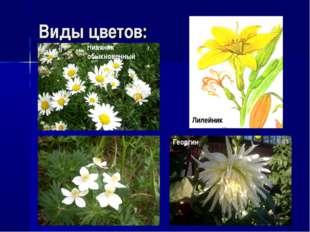 Виды цветов: Нивяник обыкновенный Георгин Лилейник
