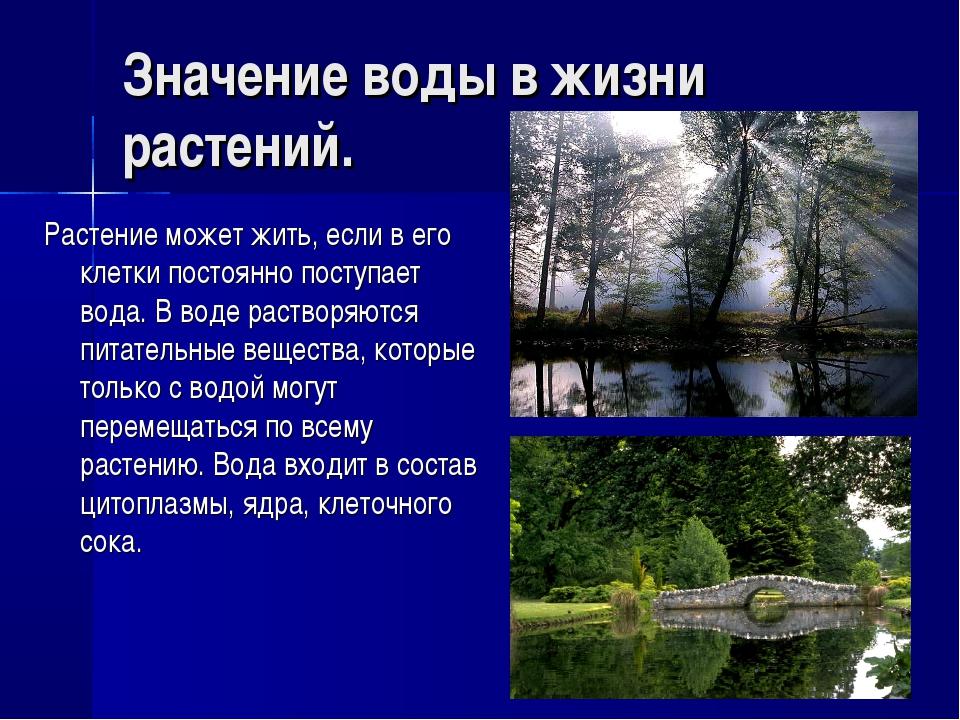 Значение воды в жизни растений. Растение может жить, если в его клетки постоя...