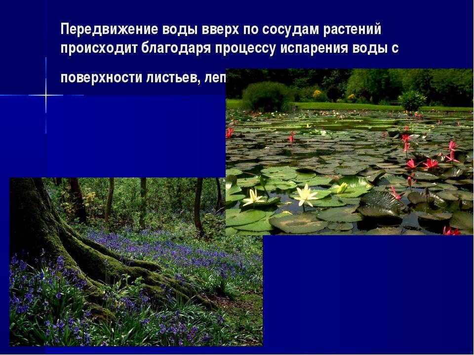 Передвижение воды вверх по сосудам растений происходит благодаря процессу исп...
