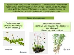 Подавляющее большинство моховидных — низкорослые многолетние травянистые раст