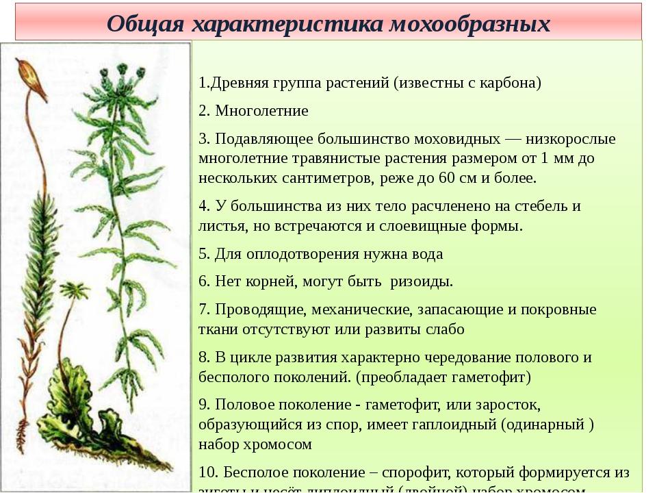 Общая характеристика мохообразных 1.Древняя группа растений (известны с карбо...