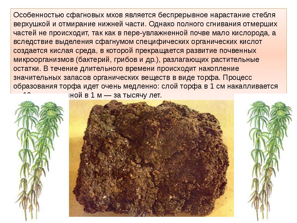 Особенностью сфагновых мхов является беспрерывное нарастание стебля верхушкой...
