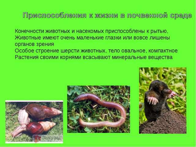 Конечности животных и насекомых приспособлены к рытью, Животные имеют очень м...