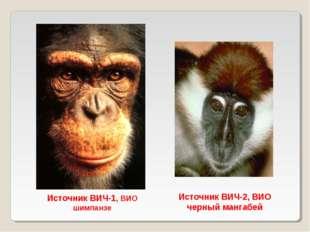 Источник ВИЧ-2, ВИО черный мангабей Источник ВИЧ-1, ВИО шимпанзе