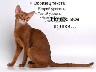 Ночью все кошки…