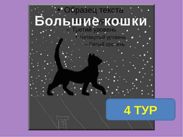 1 ТУР 4 ТУР Большие кошки