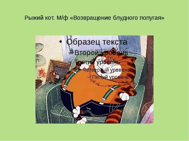 Рыжий кот. М/ф «Возвращение блудного попугая»