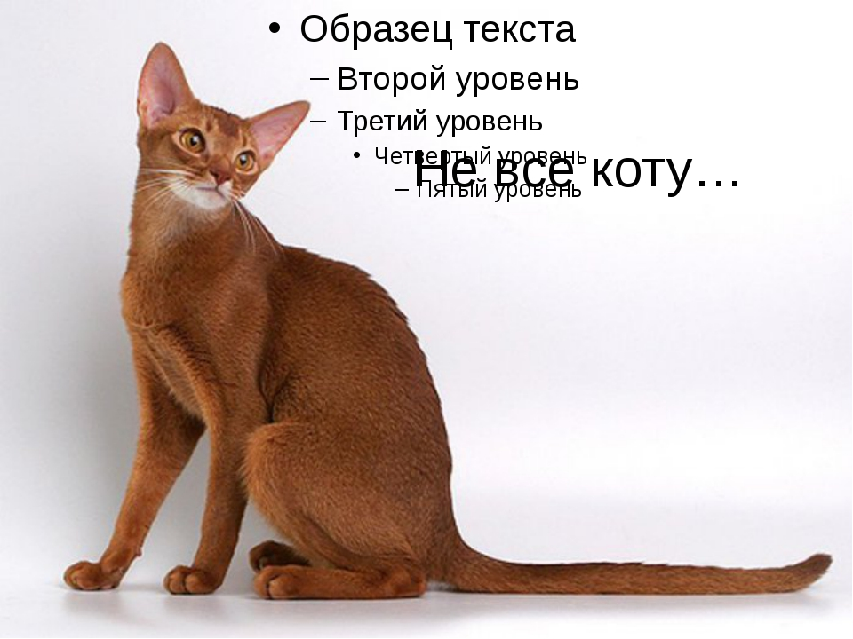 Не все коту…