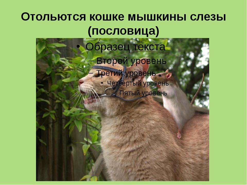 Отольются кошке мышкины слезы (пословица)