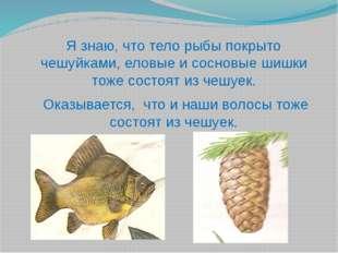 Я знаю, что тело рыбы покрыто чешуйками, еловые и сосновые шишки тоже состоят