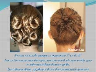 Волосы на голове растут со скоростью 15 см в год. Летом волосы растут быстрее