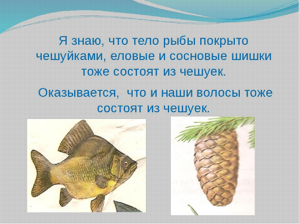 Я знаю, что тело рыбы покрыто чешуйками, еловые и сосновые шишки тоже состоят...