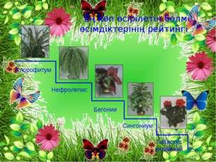 Ең көп өсірілетін бөлме өсімдіктерінің рейтингі Хлорофитум Нефролепис Бегони