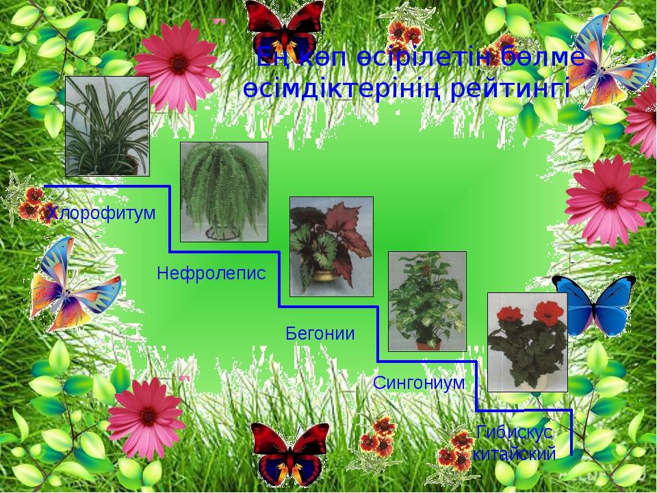 Ең көп өсірілетін бөлме өсімдіктерінің рейтингі Хлорофитум Нефролепис Бегони...