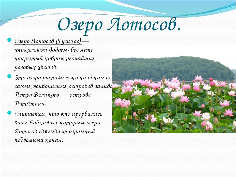 Озеро Лотосов. Озеро Лотосов (Гусиное) — уникальный водоем, все лето покрытый...