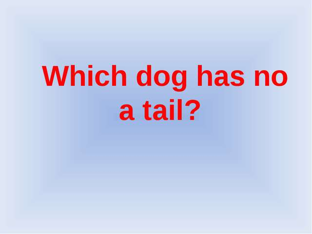 Which dog has no a tail?