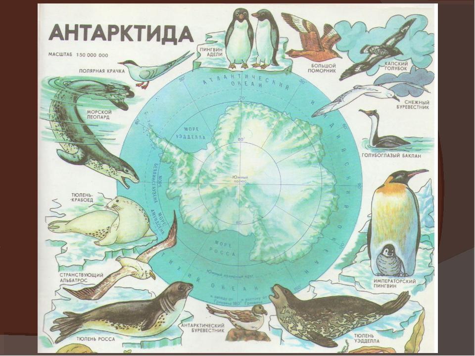 Картинка материка антарктиды для детей