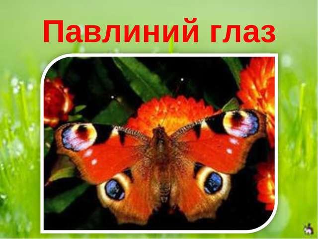 Павлиний глаз