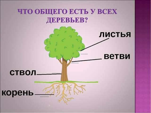корень ствол ветви листья