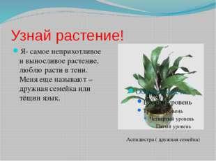 Узнай растение! Я- самое неприхотливое и выносливое растение, люблю расти в т